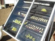 پاورپوینت خشک کن های خورشیدی